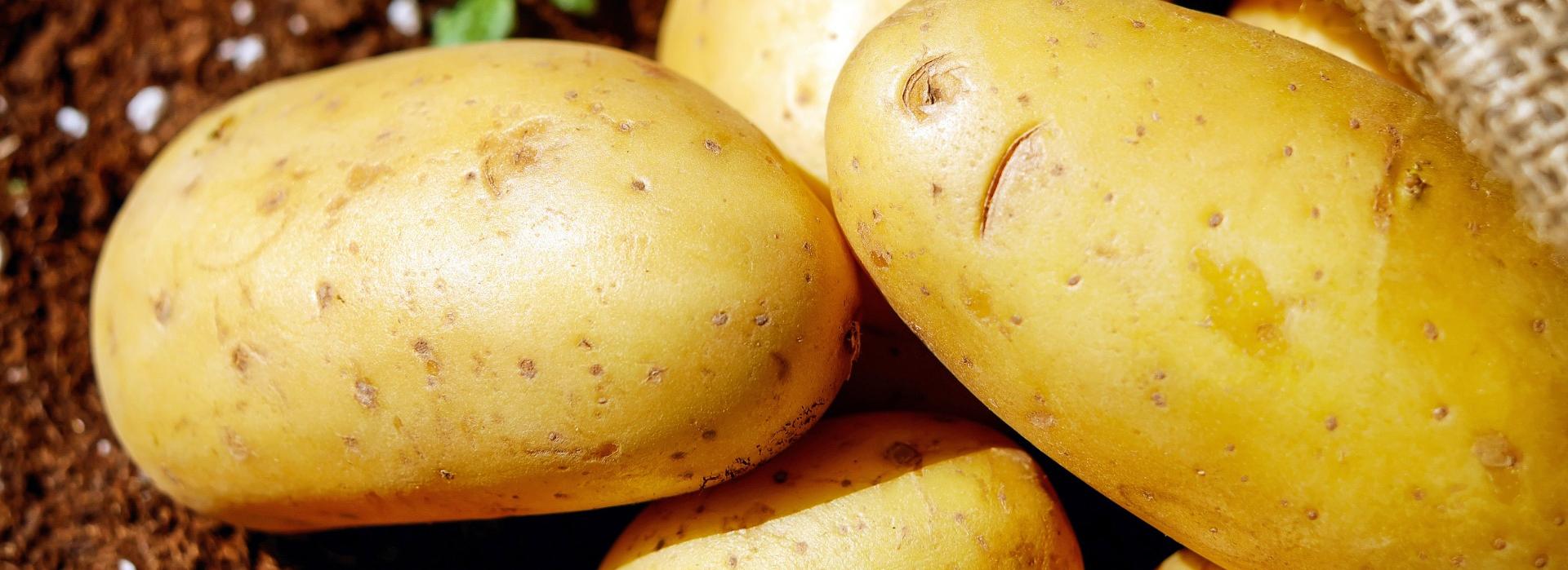 <p><strong>Ekologické brambory.</strong>Každý rok obnovujeme část sadby schválenou odrůdou vhodnou pro ekologické zemědělství.</p>